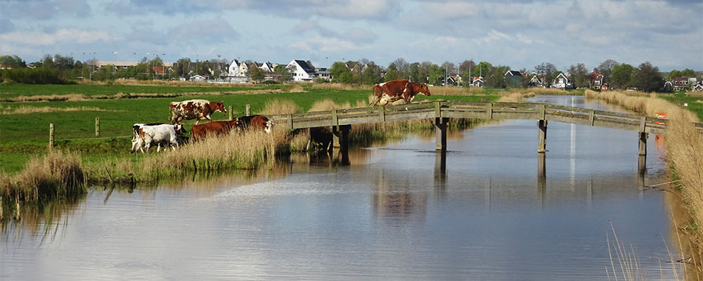 Echt Hollands landschap